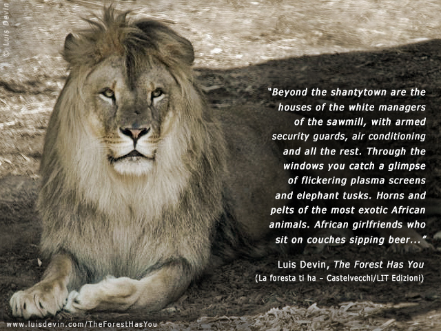 African lion (Panthera leo) - Photo gallery of the book