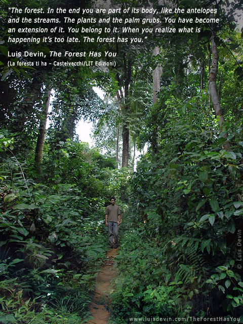 baka pygmies rainforest path photo gallery of the book the