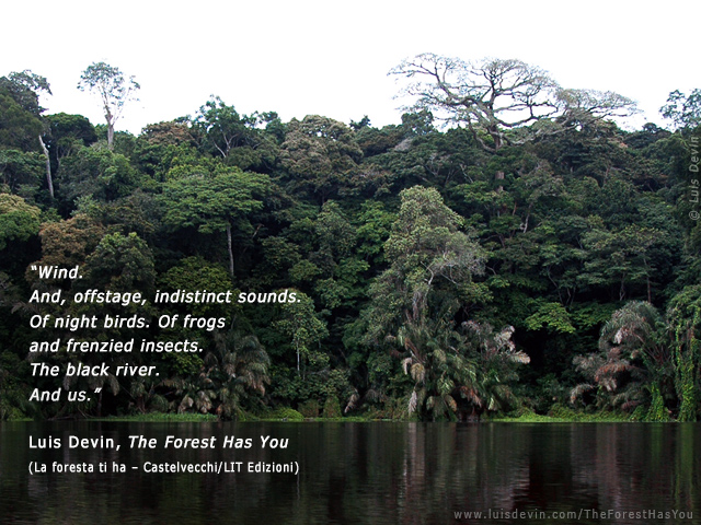 rainforest river photo gallery of the book the forest